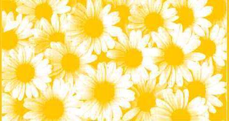 ПЦ-2602-1875 полотенце 50x90 махр п/т Camomilla цв.10000 купить оптом и в розницу