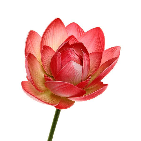 Растение водоплавающее ″Лотос распустившийся микс″ 90см купить оптом и в розницу