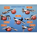 Мяч гимнастический Sportage 65 см купить оптом и в розницу