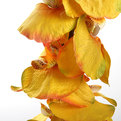 Цветок искусственный 90см декоративный Орхидея 12 бутонов купить оптом и в розницу