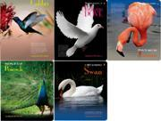 """Тетрадь 48л.кл.скрепка АЛЬТ, """"Фауна.Птицы"""", лак купить оптом и в розницу"""