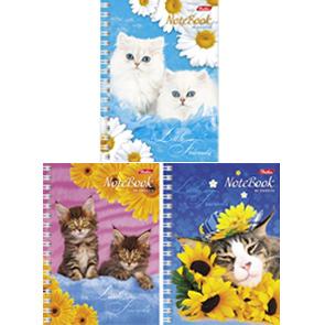 """Книжка записная А6, 80л, клетка, гребень, HATBER, """"Милые котята"""" купить оптом и в розницу"""