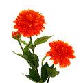 Цветок искусственный 60см декоративный Георгин 3цветка купить оптом и в розницу