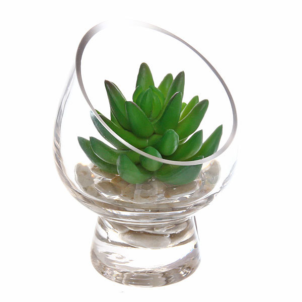Кактус композиция в стеклянной вазе d10см купить оптом и в розницу