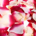 Лепестки роз бело-красные, 144 шт в упаковке, 5*5,5 см купить оптом и в розницу