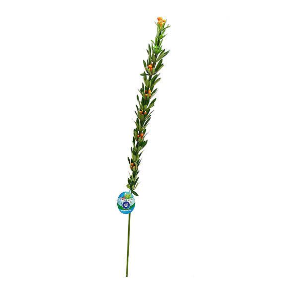 Цветок искусственный 100см ветка Облепиха 9178-44 купить оптом и в розницу