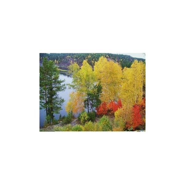 Наборы для вышивания 70*44см Природа Сибири арт.200199 купить оптом и в розницу
