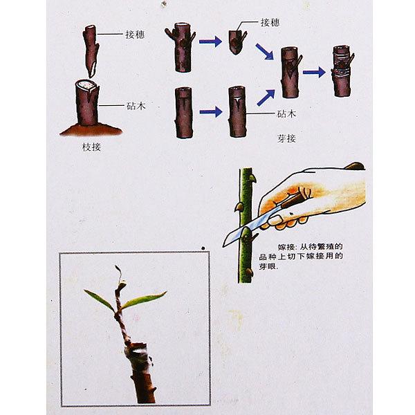 Нож садовый складной с шпателем лезвие 6,5см купить оптом и в розницу