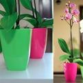 Кашпо для орхидеи 13 квад. 1,5л.розовый  *10 Form plastic купить оптом и в розницу