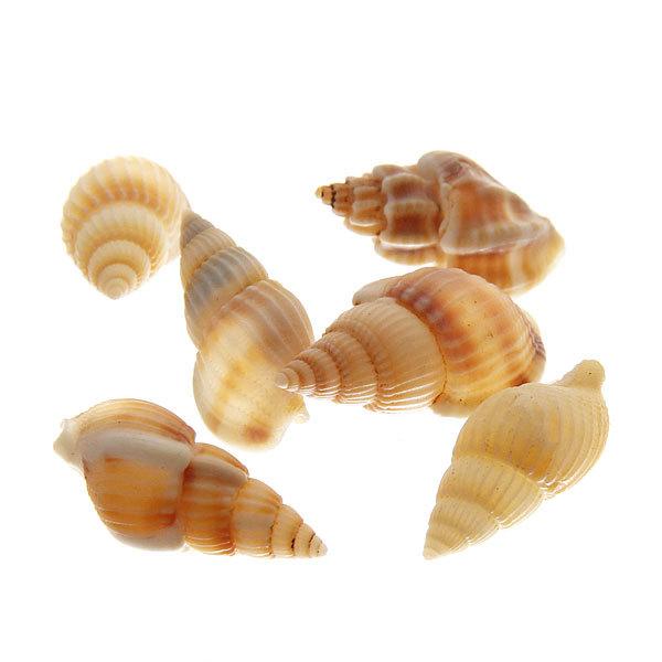 Ракушки декоративные ″Жемчужина Черного моря″ 100гр маленькие купить оптом и в розницу