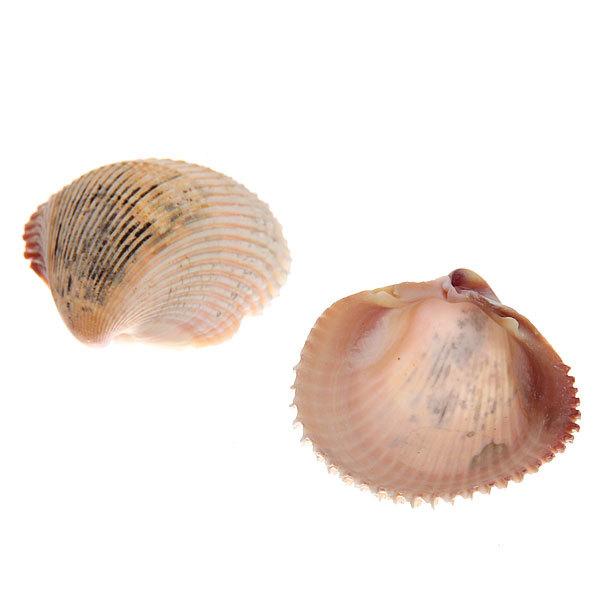 Ракушки декоративные ″Морской царь″ 100гр купить оптом и в розницу