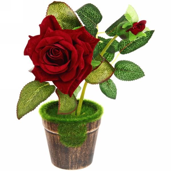 моменты бордовые розы в горшочках фото центральный